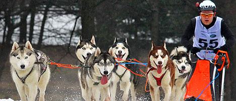 International Sled Dog Race Zavirukha
