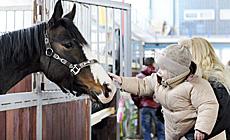 """Міжнародная выстаўка-шоу пародзістых коней """"Восень 2013"""""""
