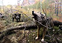 Музей природы в Национальном парке «Припятский»