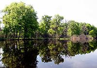 Пойменные дубравы Припятского Полесья