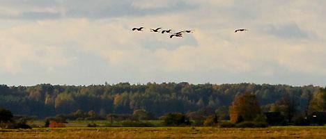 Yelnya Landscape Reserve
