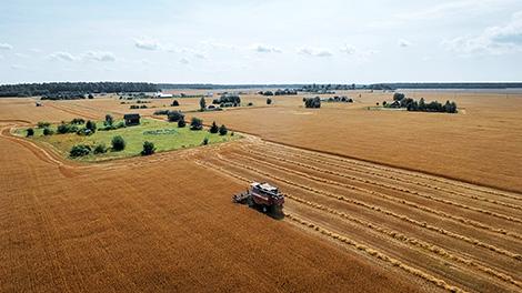 Harvesting campaign in Minsk Oblast
