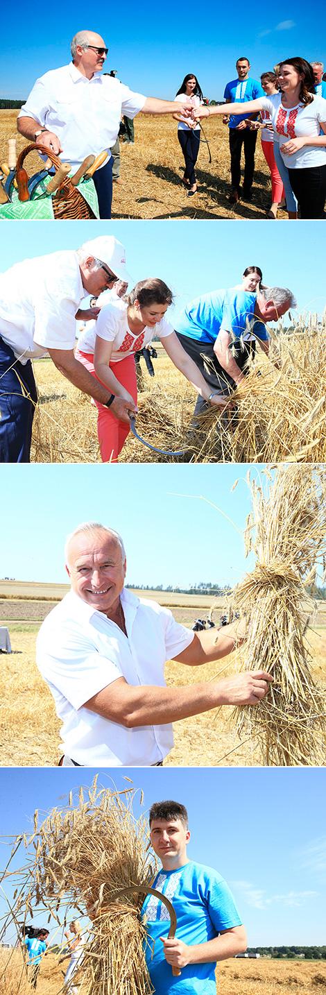 Лукашэнка навучыў журналістаў жаць сярпом
